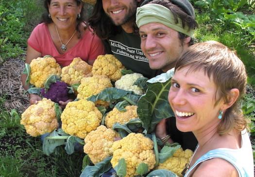Gardeners and cauliflower_web